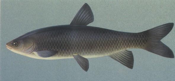 рыбный комбикорм как прикормка для рыб